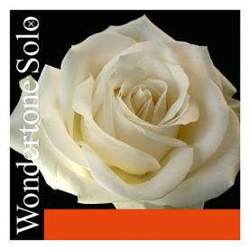 Cuerda La Violin Pirastro Wondertone Solo 312221